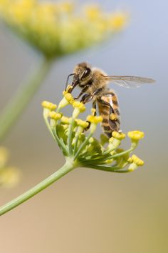 pollination is a beautiful thing!