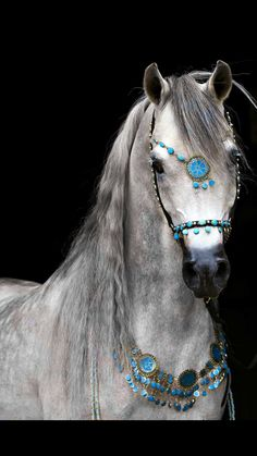 o so pretty! Arabian dressed up with turquoise.
