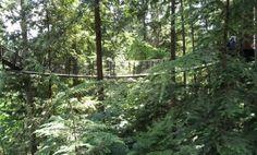 Fun in the trees @ #Capilano #BC #Canada
