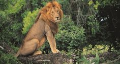 Stay at the David Livingstone Safari Lodge and Spa on our travel deal and explore Vic Falls while you stay at the David Livingstone Safari Lodge. David Livingstone, Pretty Cats, Pretty Kitty, Victoria Falls, Holiday Travel, Safari, Lion, Adventure, Animals
