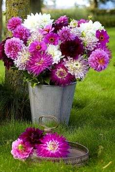 Unusual Flowers, Love Flowers, Purple Flowers, Beautiful Flowers, Deer Resistant Annuals, Purple Flower Arrangements, Summer Bulbs, Growing Dahlias, Dahlia Flower