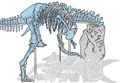 "Thanks to a group of scientists and a unique Canadian workshop, ""the Nation's T. rex"" is not only standing for the first time in 66 million years — it's also eating lunch."