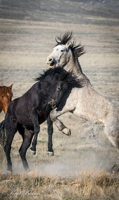 Free Horses, Two Horses, Harry Potter Bag, Wild Mustangs, Wild Ones, Wild And Free, Beautiful Horses, Spirit Animal, Westerns