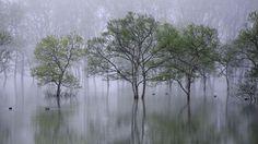 Beautiful morning, Lake Shirakawako, Japan, 2014 - by Teruo Araya (1970), Japanese