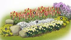 Plant tulips and daffodils in the fall for a spring spectacular next year Add in a few perennial companions such as the basket of gold rock cress and dames rocket seen he. Bulb Flowers, Flower Garden Plans, Spring Bulbs Garden, Garden Bulbs, Daffodils, Tulips Garden, Spring Garden Flowers, Garden Planning, Bulbs Garden Design
