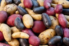 Potatoes are more than good taste and nutritious. You can put potatoes to many good, if unusual, uses around the home. Homemade Mashed Potatoes, Creamed Potatoes, Making Mashed Potatoes, Grow Potatoes, Potato Health Benefits, Benefits Of Potatoes, Humble Potato, Raw Potato, Alcohol