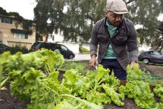 Oakland chef and activist Bryant Terry has been at the forefront of the sustainable food justice movement.