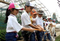 kegiatan Animal Feeding