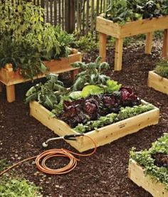 great for a little back yard garden.