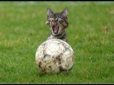 BEST FUNNY VIDEOS OF CATS   FUNNY CATS   FUNNY ANIMALS   FUNNY VIDEOS 20...