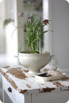 Spring Flowers - a potted lily in a vintage French terrine - via Lilla Blanka