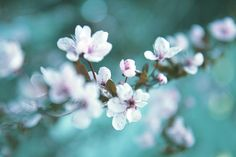 home decor wall art, fine art flower photography, dreamy floral art print, cherry blossom spring Spring Home Decor, Floral Photography, Home Decor Wall Art, Just In Case, Beautiful Flowers, Fine Art, Art Prints, Artwork, Etsy