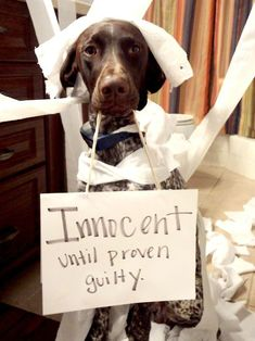 Dog Shaming - hilariously adorable!!! And whaddya know, it's a German Shorthair Pointer like mine. lmao #germanshorthairedpointerfunny