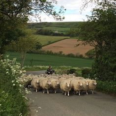 A Lovely Scene in the English Countryside -Content in a Cottage English Country Cottages, English Village, English Countryside, British Country, Sheep And Lamb, All Gods Creatures, Country Life, Country Farm, Country Living