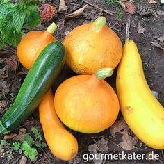 Ernte!! #food #gardening #harvest