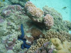 Snorkeling - Rarotonga, Cook Islands