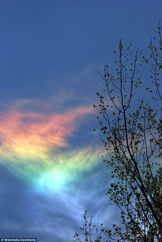 Fire rainbows occur when sunlight and cloud ice particles align perfectly to create a prism that hangs beneath the sun and looks like a rain...