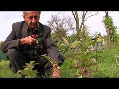 Ivan Hričovský: Pestujeme čučoriedky - YouTube Gardening, Teacher, Garten, Lawn And Garden, Horticulture