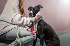 ✿ T R U E ✿ Dogs make everything better 💖  www.rudelliebe.de  #hund #frenchbulldog #dog #dogs #halsband #dogsofinstagram #goldenretriever #instadog #dogstagram #dogoftheday #dogs_of_instagram #retriever #labrador #pudel #instapets #puppy #exellent_dogs #dalmatiner #hundehalsband #labrador #labradoodle #jackrussel #mops #pets_of_instagram #bestwoof #australianshepherd #beagle #französischebulldogge #dalmatiner #dackel #doglife #hundeliebe