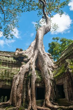 11 Things You Have To See In Phnom Penh, Cambodia 11 Incredible Temples You Have To See In Angkor, Siem Reap, Cambodia Cambodia Beaches, Cambodia Travel, Phnom Penh, Siem Reap, Places To Travel, Places To See, Angkor Wat Cambodia, Ancient Architecture, Gothic Architecture