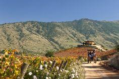 A linda rota do Vinho no Vale de Colchagua, Chile. #Travel #Chile #Santiago