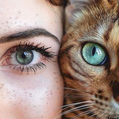 Seeing eye to eye - Animaux Pretty Eyes, Beautiful Eyes, Most Popular Cat Breeds, Aesthetic Eyes, Seeing Eye, Cat Day, Animal Photography, Most Beautiful Pictures, Cats Of Instagram