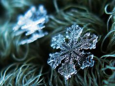 The infinite variation and natural beauty of snowflakes is amazing. As you check out the gallery of amazing macro photos of snowflakes think about the designs and how the space created between them… Snowflake Photography, Winter Photography, Nature Photography, Micro Photography, Photography Ideas, Fotografia Macro, Snowflake Pictures, Photo Macro, Winter Beauty
