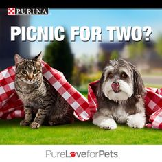 Don't mind if we do! Pin your favorite pic of cats or dogs enjoying spring break—and you could win FREE Purina® for a Year! Enter today! Go to http://sweeps.piqora.com/PurinaSpringBreak. NO PURCHASE NECESSARY. Valid in 50 U.S. & D.C. Must be 18+ (19+ in AL & NE; 21+ in MS), & own a cat or dog or both. Ends 3:00 p.m. ET on 4/29/14. Void where prohibited. See Official Rules at http://sweeps.piqora.com/PurinaSpringBreak. #PurinaSweeps