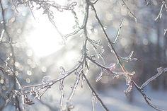 5oceans:    frozen beauty (by nadia ☆ bolshakova)
