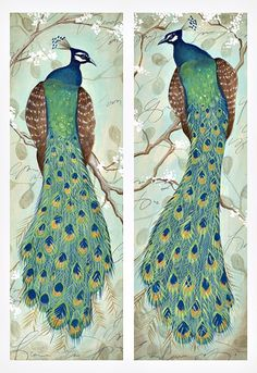 Amazon.com: 2 Roosting Peacock Art Prints Exotic Animal Home Decor 6x18: Home Improvement