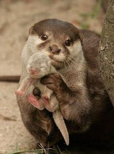 Otter Mommy: 'See my baby?'