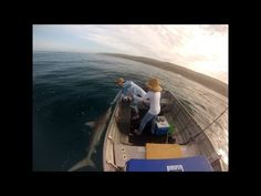 Funny video catching a nice sized Bronze Whaler Shark and then being released My Dad, Being Ugly, Shark, Thats Not My, Dads, Bronze, Nice, Videos, Funny