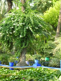An oasis of calm in the hustle and bustle of Marrakech. The iconic Marjorelle Gardens are a must see, and re create this feel at home with help of Maroque http://www.maroque.co.uk/