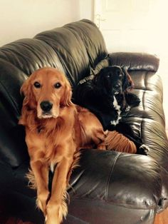 sorry, the couch is taken!