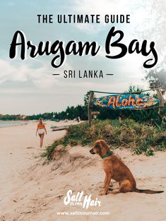 Arugam bay guide things to do pin