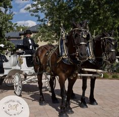 Feel like Cinderella in our wedding carriage; available only at Nithridge Estate Wedding Events, Our Wedding, Dream Wedding, Wedding Carriage, Draft Horses, Like You, Dreaming Of You, Beauty, Cinderella