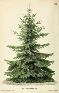 Christmas tree poster - kerstboom schoolplaat