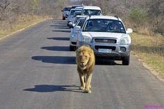 Like a king #Amazing #Animals Amazing.pk