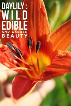 Daylilies add bursts