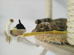 The German carpenter Stefan Hofmann has created every indoor cat's dream: The specially designed playground including scratching boards and climbing trees. If the cat can not get out into nature to get the wild get in to the cat, thought Hofmann and started the design firm Goldtatze.