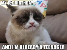 We all know how easy it is to live with a teenager!  - Grumpy Cat Birthday 4-4-2013*