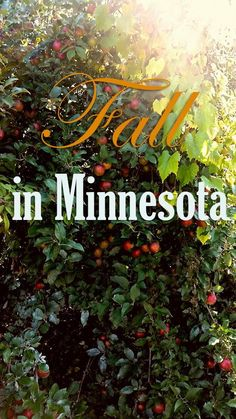 Top Things to do During Fall in Minnesota #Minnesota #Fall #AppleOrchard