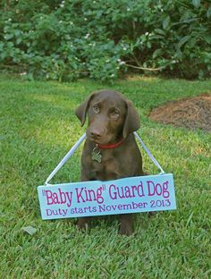 Dog pregnancy reveal