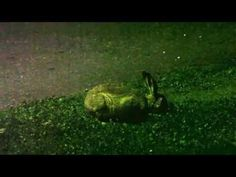 Cute animals - european hare - YouTube During The Summer, My Animal, Hare, Cute Animals, Wildlife, Videos, Youtube, Pretty Animals, Cute Funny Animals