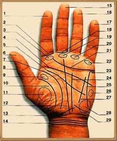Significado de la Lectura de Manos - - Las Revelaciones del Tarot