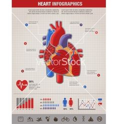Human heart health disease and attack infographic vector by ma_rish on VectorStock®