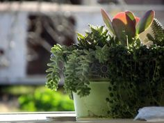 Succulents at Sensible Gardeniing