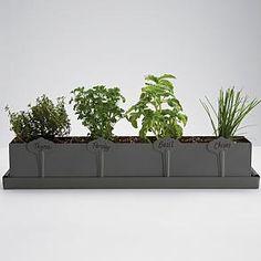 kitchen herb planter from
