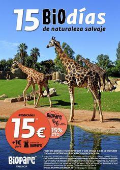 Promoción 15 Biodías de Bioparc Valencia - http://www.valenciablog.com/promocion-15-biodias-de-bioparc-valencia/
