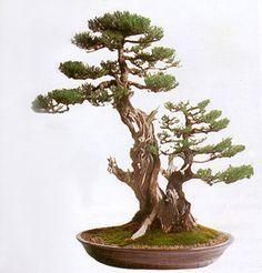 Transformation in Bonsai by Robert Steven✖️FOSTERGINGER AT PINTEREST ✖️